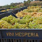 hesperia-red-white-wine-making-producing-south-italy-anna-della-porta-00