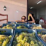 hesperia-red-white-wine-making-producing-south-italy-anna-della-porta-18