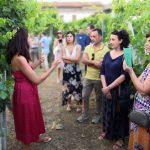 hesperia-red-white-wine-making-producing-south-italy-anna-della-porta-31